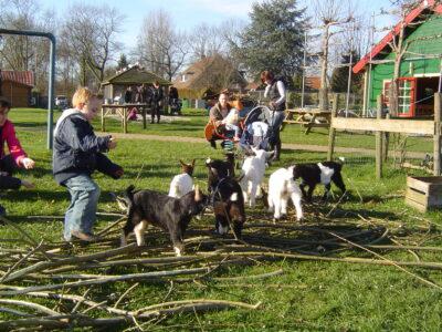 Vertrouwen opbouwen op de kinderboerderij
